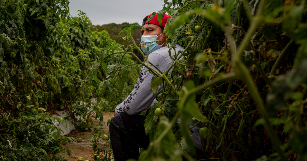 Migrant Workers Restricted to Farms Under One Grower's Virus Lockdown